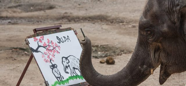 Painting-Elephant-Chiang-Mai-Thailand
