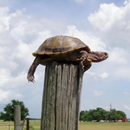 turtle on fencepost