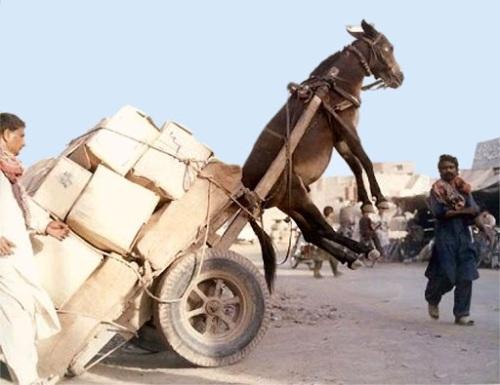 overloaded cart