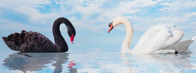 Black-White-Swan-scaled
