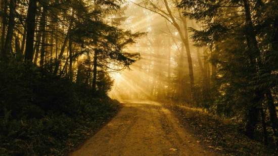 divine-path