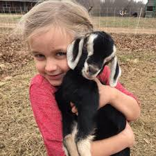 ljubomir farm goat