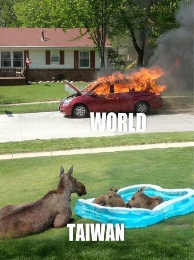 World vs Taiwan moose