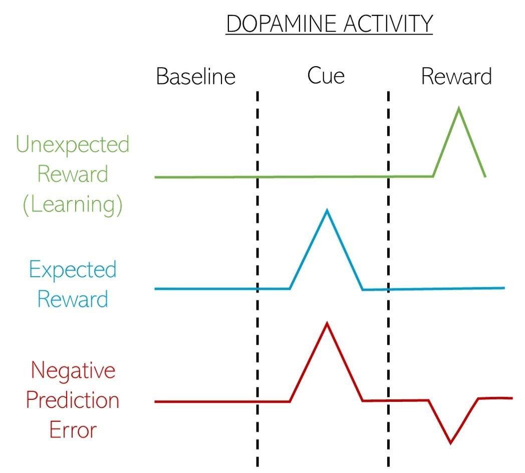 rewards and dopamine